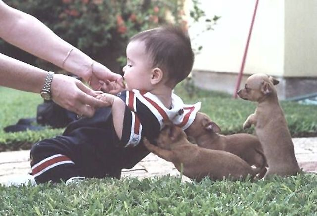 Toddler gets a helping hand (paw)from some puppies